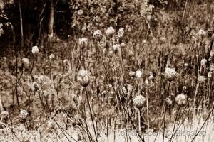 /Flores secas há beira da estrada.