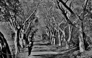 /Pelo bosque