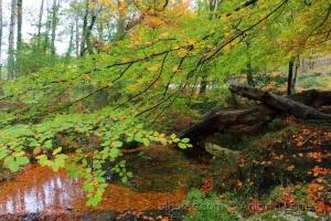 / Cores de Outono...