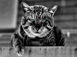 /Porque hoje é o Dia Mundial do Gato