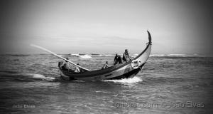 /Lobos do Mar