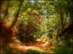 Paisagem Natural/caminhos encantados
