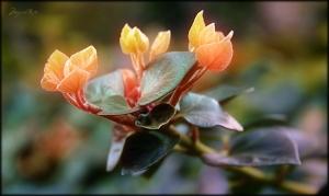 Macro/Flor-Gradiente