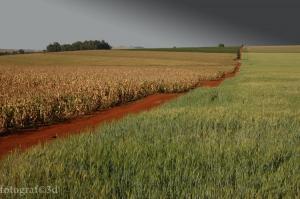 Paisagem Natural/MARILÂNDIA DO SUL/PR - Área Rural (IV)