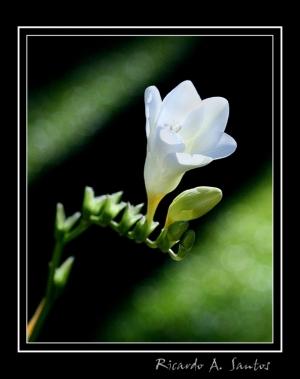 /Flor X