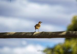 Animais/Pássaro