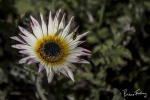 Paisagem Natural/No meu jardim...... (15)