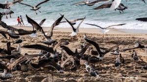 /Os meninos à volta das gaivotas