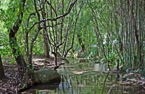 Paisagem Natural/Na floresta encantada
