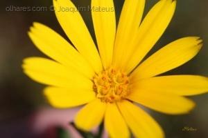 Outros/Flor silvestre....