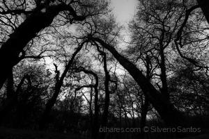 Outros/floresta a preto e branco