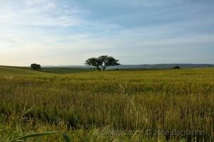 /Por esse campos fora, para os lados de Selmes.