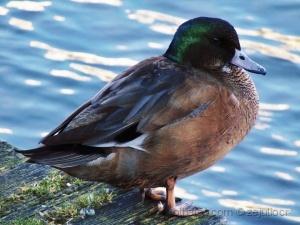 Outros/Duck