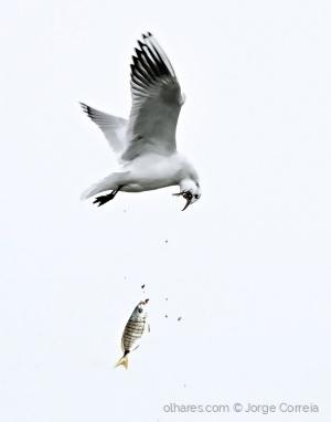 Outros/Pesca