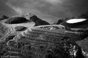 /Rice Terraces