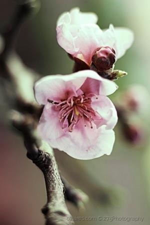 Paisagem Natural/o despertar continuo da Primavera