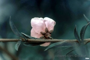 /Primavera