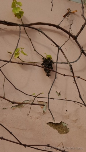 Outros/Parede d'uva
