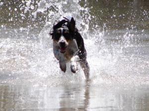 /supersonicdog