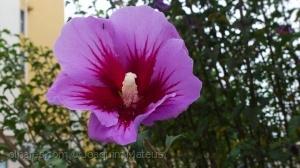 Macro/A flor e a formiga