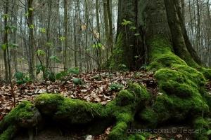 Paisagem Natural/Vida Nova