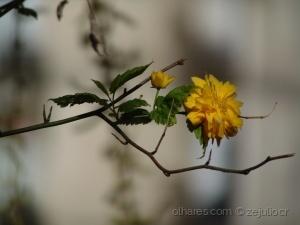 Paisagem Natural/The little yelow flower