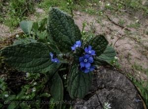 Outros/Flores silvestres