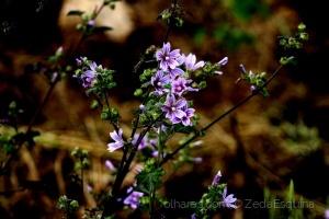 /Flores silvestres.....(pf. ler descrição)