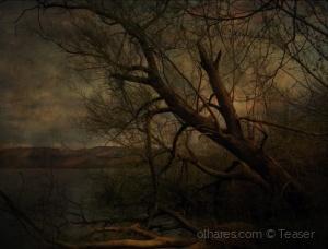 Arte Digital/Floresta Encantada