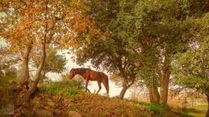 Animais/meu reino por um cavalo