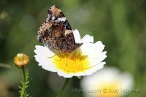 Macro/Borboleta/flor