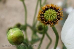 Macro/Flores silvestres