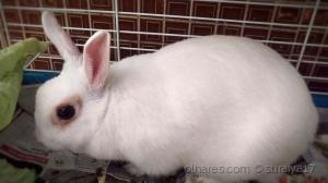 /My rabbit