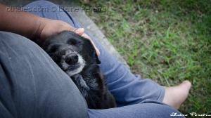 /Procura-se um amor que goste de cachorros