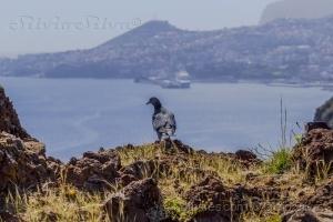 Paisagem Natural/Com vista para o Funchal...
