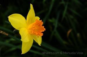 Macro/Narciso
