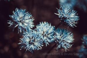 /Quinteto