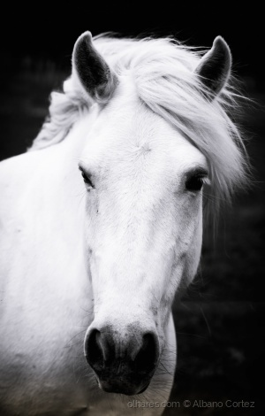 /Horse with no name.
