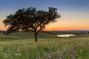 Paisagem Natural/Alentejo by sunset