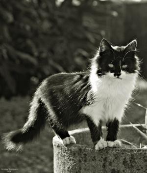 /Eu acho que vi um lindo gatinho ... (ler)