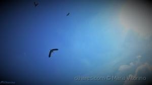/Voar livre como os pássaros...(ler sff)