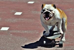 /Apollo, The Special  Skater Dog - 1 (ler/ver)