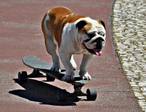 /Apollo, The Special  Skater Dog - 2 (Ler)