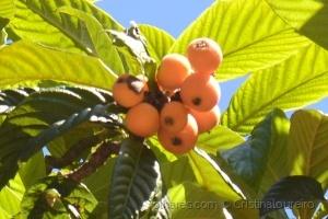 Outros/Fruta da época