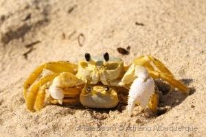 Animais/Namoro na Praia