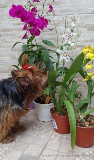 /Cheirando as Flores