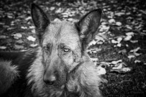 Animais/O fiel companheiro...