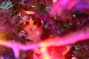 Animais/Hidden cat
