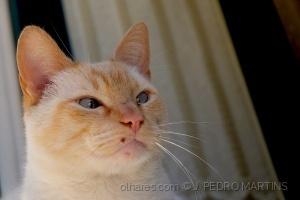 /Le chat