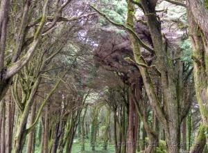 /O bosque misterioso